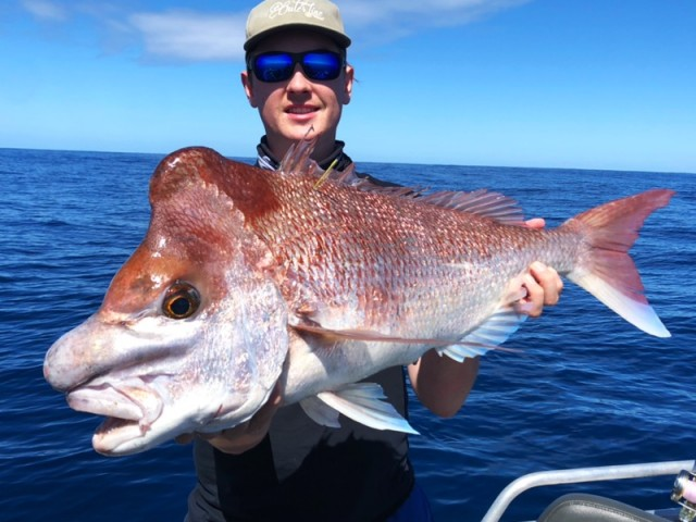 Lachie Big Snapper
